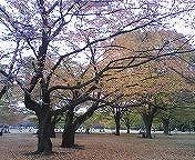 黄色く色づいた葉っぱのじゅうたん・・・・