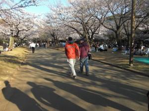 桜並木をおトンと二人で・・・